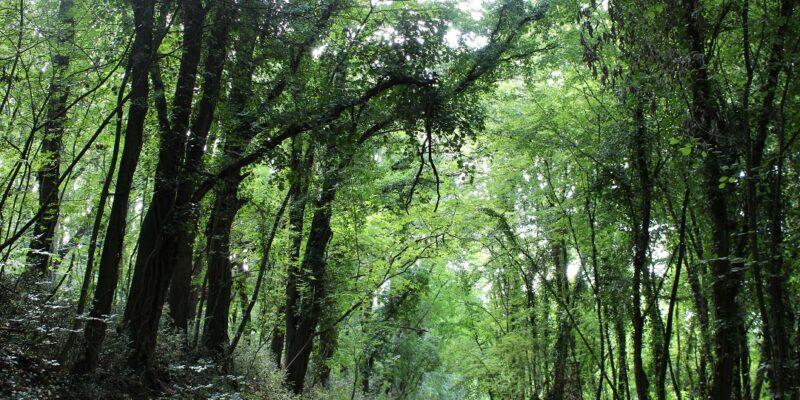 il bosco preistorico